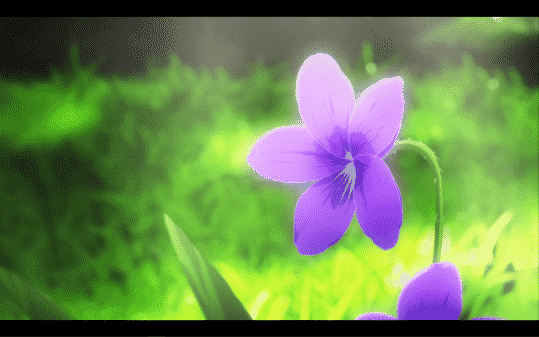 The violet which inspired Major Gilbert to give Violet her name.
