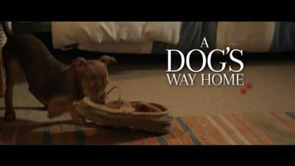 A Dog's Way Home - Alternate Title Card